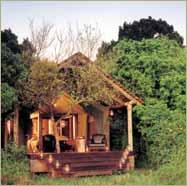 Kichwa Tembo Bateleur Camp Mara Kenya